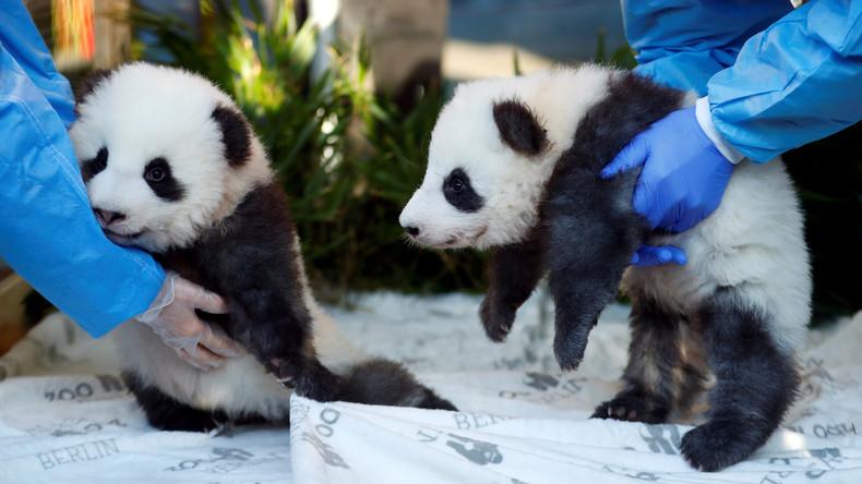 Traumhafte Namen: Berliner Panda-Jungs werden getauft (Video)