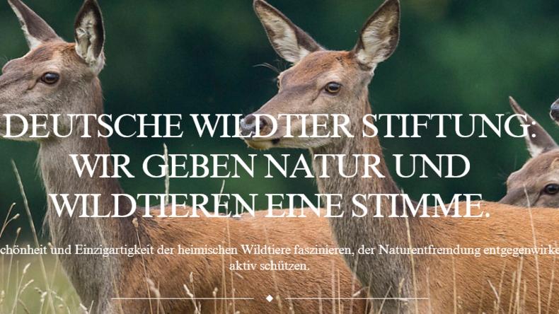 Wildtier-Stiftung feuert Vorstand – weil er nicht an die Klimakatastrophe glaubt