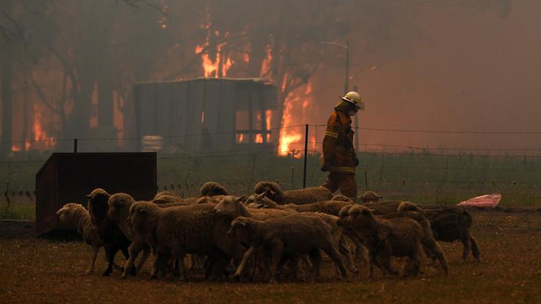Buschbrände lodern in Australien