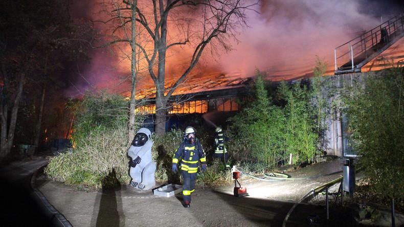 Brand im Krefelder Zoo: Nur zwei überlebende Tiere im Affenhaus