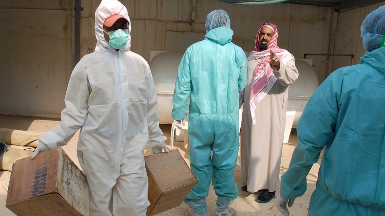 Saudi-Arabien meldet Ausbruch der hochansteckenden Geflügelpest