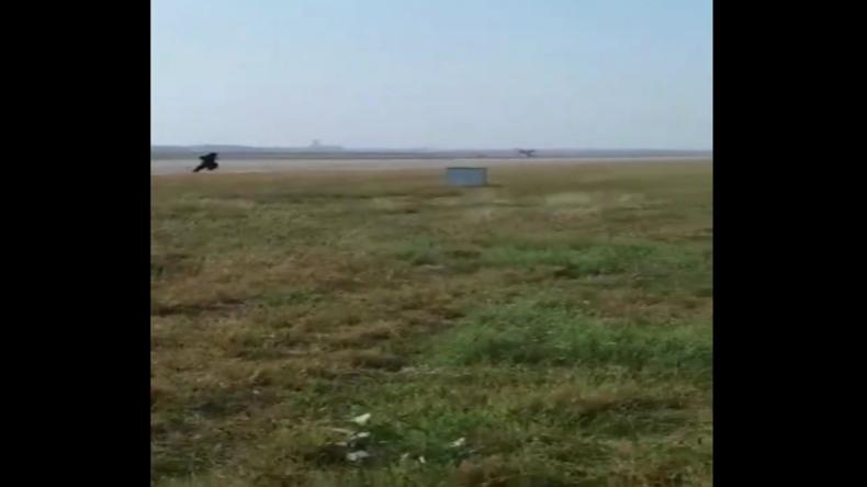 Sachen gibt's: Flughafen-Mitarbeiter schlüpft in Bärenkostüm, um Affen von Startbahnen zu scheuchen