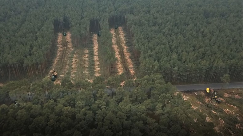 Rodung hat begonnen: Tesla fällt Hunderte Bäume in Brandenburg trotz ausstehender Genehmigung