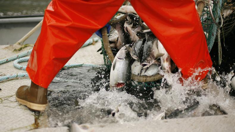 Fischer im US-Bundesstaat Alaska leiden unter Russlands Nahrungsmittelembargo