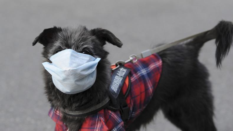 Hongkong: Hund einer Patientin nach positivem Coronavirus-Test in Quarantäne