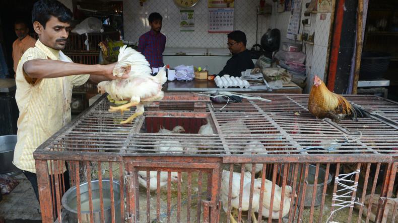 Wegen Fake News über Corona: Indischer Bauer zerstört Küken und Eier im Wert von 700.000 US-Dollar