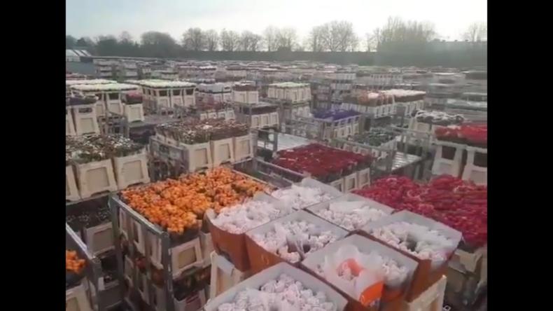 Einschränkungen durch Coronavirus: Holland muss Millionen Blumen vernichten