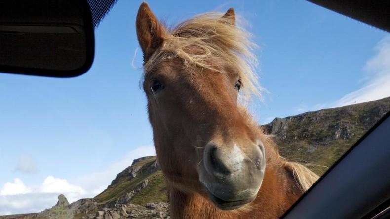 Unfaires Rennen: Pferde überraschen Autofahrer in Bogotá