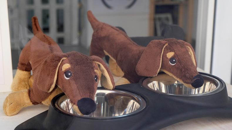 Ausgangssperre macht kreativ: Spanier gehen mit Ziege und Plüschhund Gassi