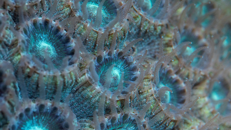Chinesische Forscher identifizieren Korallenarten zur Wiederherstellung abgestorbener Koralleninseln