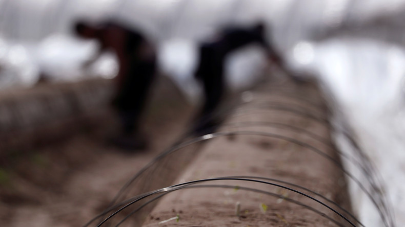 Deutschland: Asylbewerber sollen in Landwirtschaft aushelfen