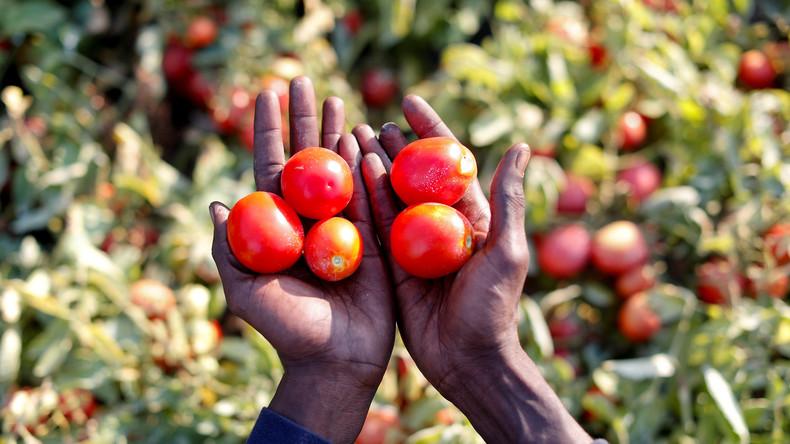 UN: Corona-Krise könnte weltweite Nahrungsmittelknappheit auslösen