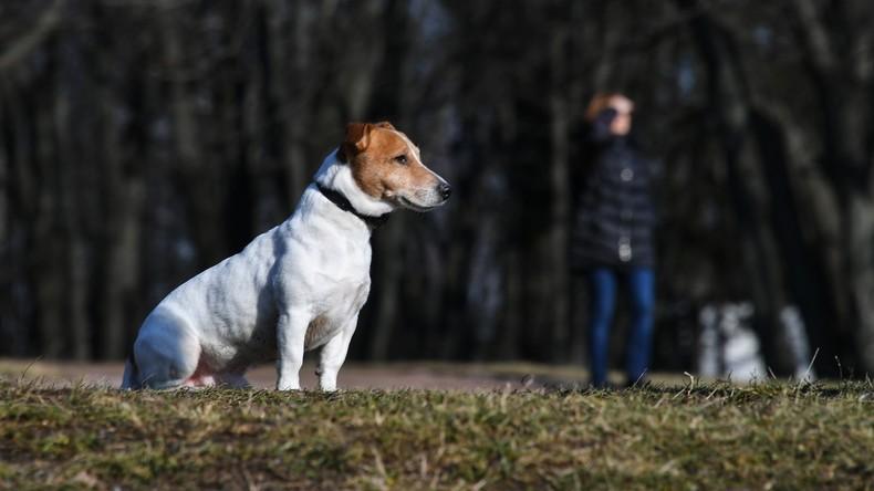 Um Quarantäne zu entgehen: Russische Hundebesitzer vermieten ihre Haustiere