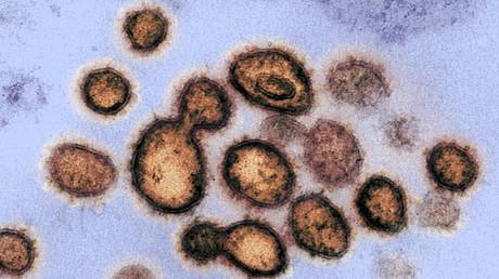 Corona-Virus eines US-Patienten unter dem Mikroskop (Bild vom 27. Februar).