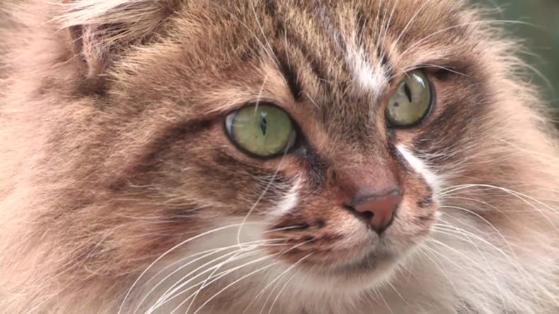 Libanon: Haustiere werden wegen Befürchtungen zum Coronavirus zunehmend ausgesetzt
