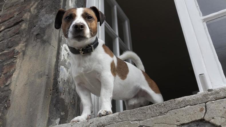 Zu grausam oder zu pflichtbewusst? Herrchen führt Hund direkt aus dem ersten Stock Gassi