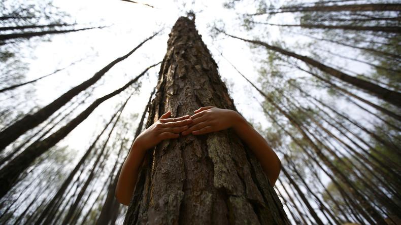 Island: Forstdienst empfiehlt, Bäume zu umarmen, da man in Corona-Zeiten keine Menschen umarmen kann