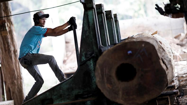 Abholzung in Amazonien nimmt während Corona-Krise enorm zu