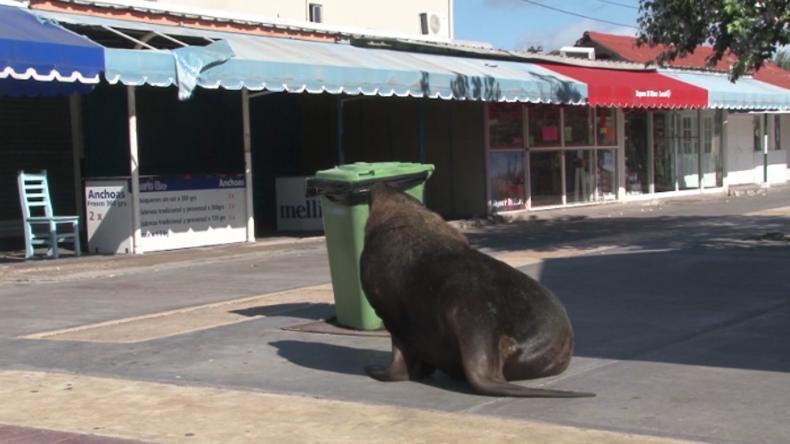 Argentinien: Seelöwen erobern menschenleere Strandpromenade und baden vor Touri-Shops in der Sonne