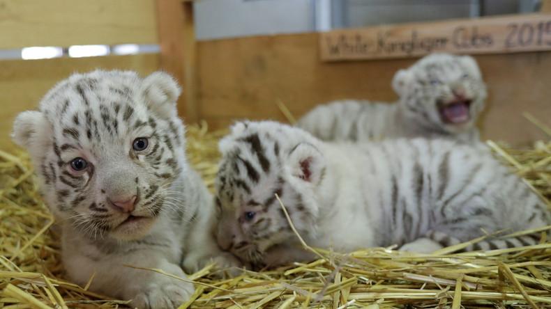 Tötung gesunder Tiere in Tierparks: Eher die Regel als die Ausnahme