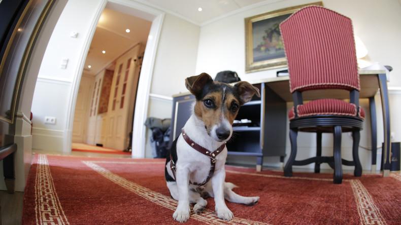 Russen drohen Bußgelder für Hundegebell in der Nacht