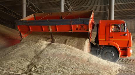 Ein LKW entlädt Weizen während der Weizenernte in der Region Stawropol