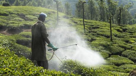 Klare Gesundheitsschutzvorgaben müssen nicht zum Absatzeinbruch führen – durch den Export von Chemikalien in Länder mit laxeren Vorschriften generieren deutsche Konzerne saftige Gewinne. Symbolbild: Teeplantage in Kerala, Indien.
