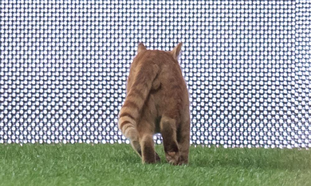 Superstar im Katzen-Fußball: Stubentiger beweist Menschen seine Torwart-Begabung