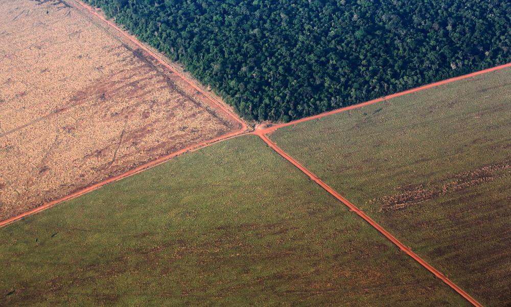"""WWF: Tropenwald-Zerstörung nahm im """"Corona-Monat"""" März weltweit massiv zu"""