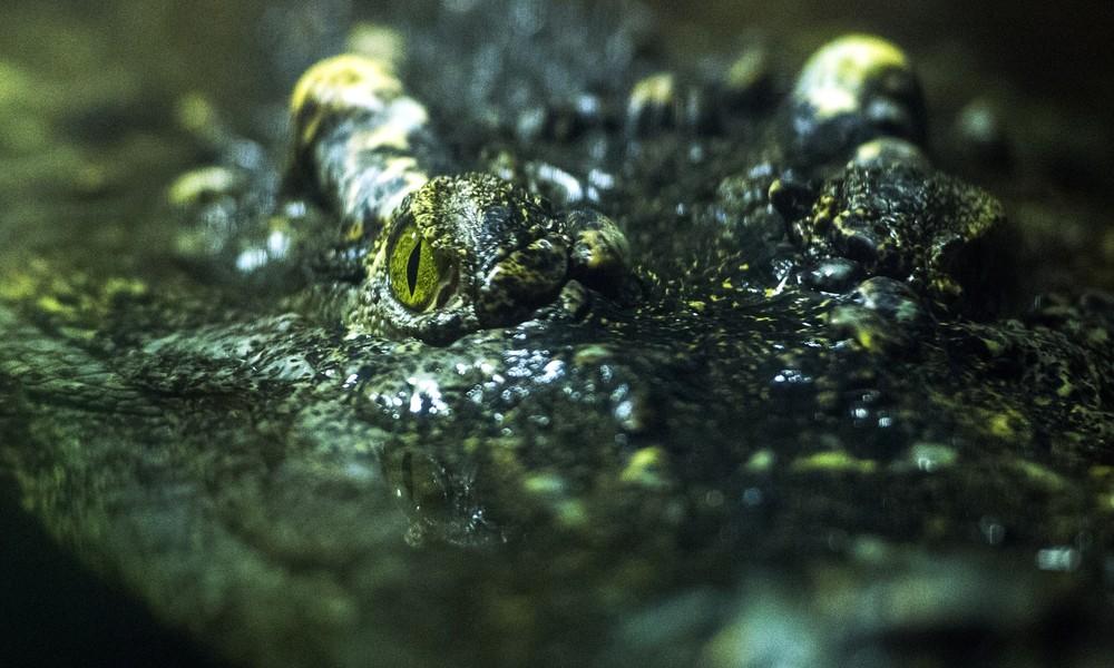 Adolf Hitlers Zeitgenosse stirbt im Moskauer Zoo: Geheimnis des Alligators Saturn bleibt ungelöst