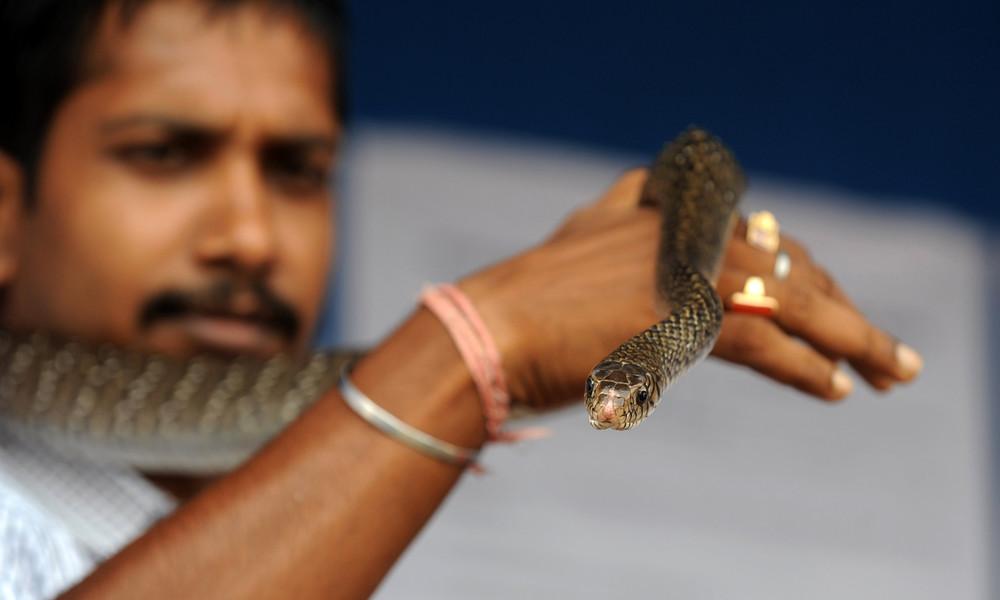 Indien: Mann tötet schlafende Ehefrau mit Giftschlange
