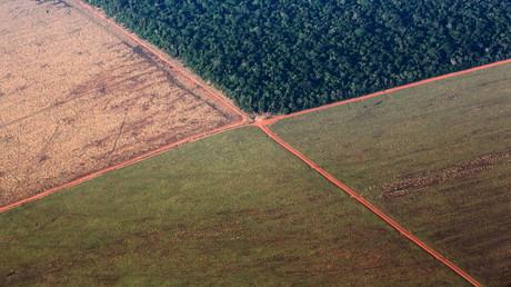 WWF: Tropenwald-Zerstörung im