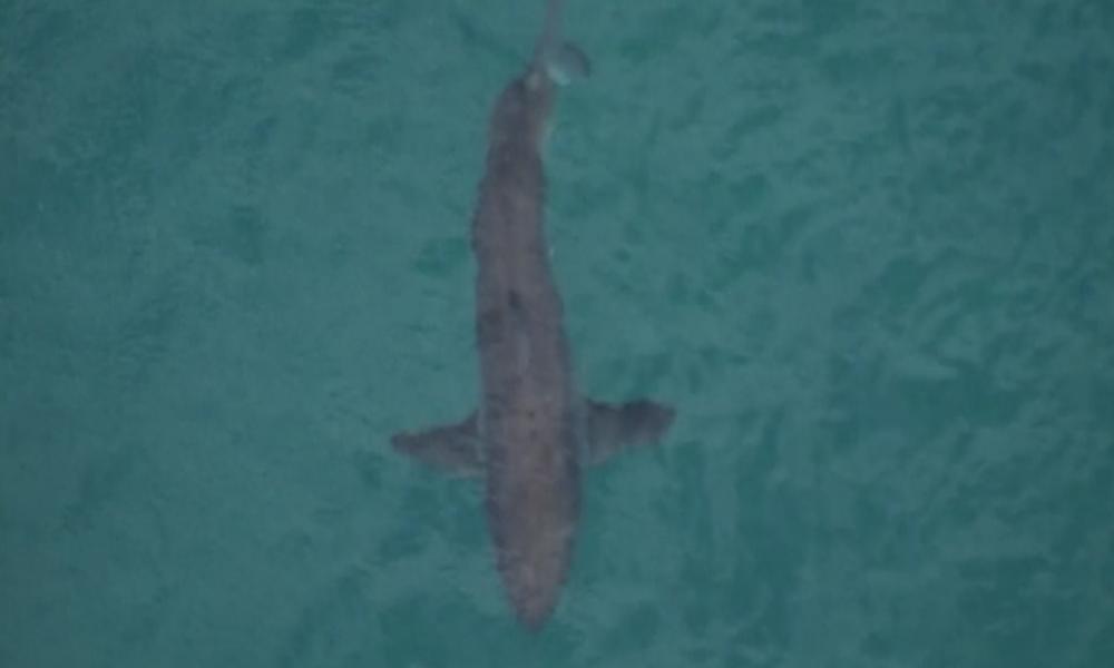 Australien: Drei Meter langer Hai tötet Surfer