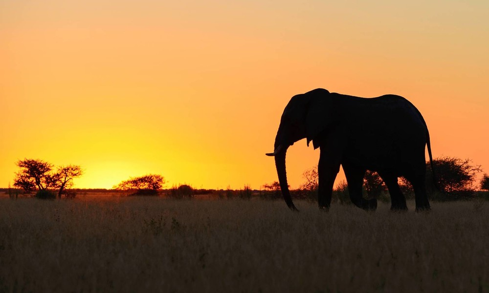 Mysteriöses Elefantensterben in Botswana