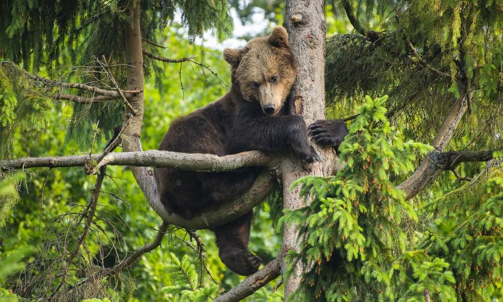 Bär will Vögel um Futter bringen: Mann verteidigt Futterhäuschen mit lauten Rufen