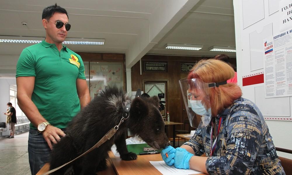 Abstimmung über Verfassungsänderungen in Russland: Zutritt für Bären nicht verboten