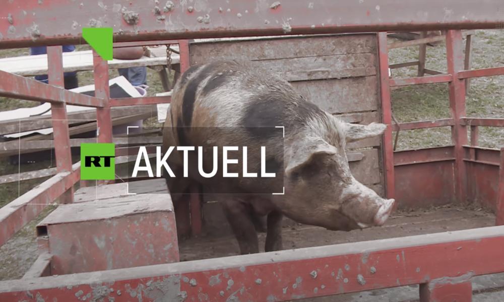 Interview: Neues Mogel-Gesetz verlängert das Leid der Säue (Video)