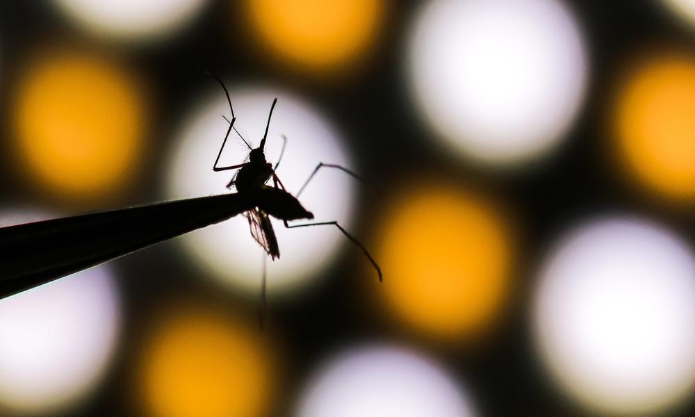 "Norwegerin zeigt ihre ""Fangausbeute"": Zehn Liter Mücken in zehn Tagen"