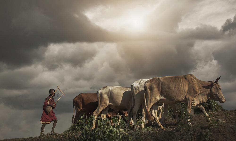 Studie: Wie die Bill-und-Melinda-Gates-Stiftung die Not in Afrika verschärft