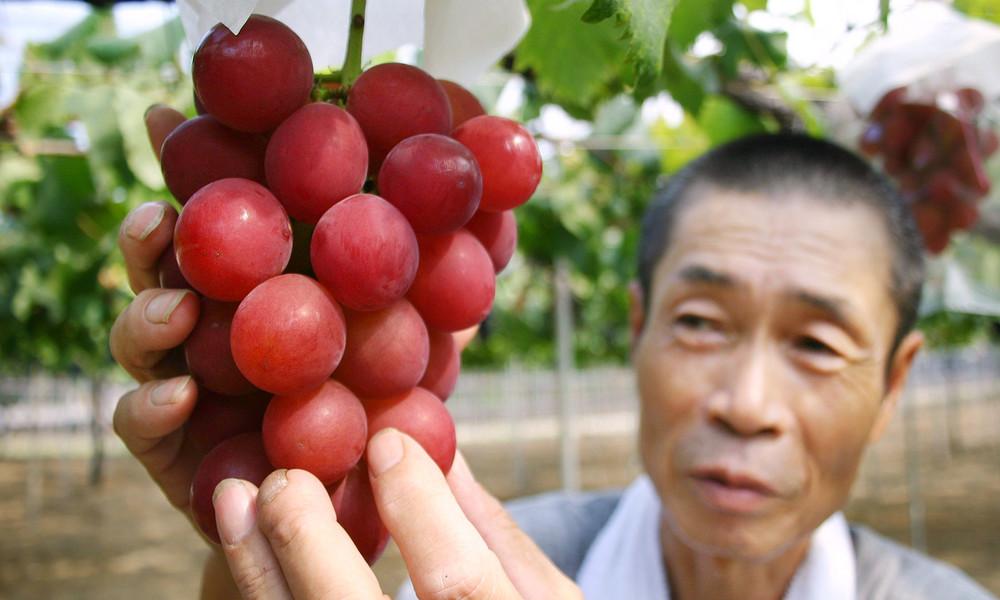 Rekordpreis für Weinbeeren in Japan: Rund 30 Trauben für 10.000 Euro