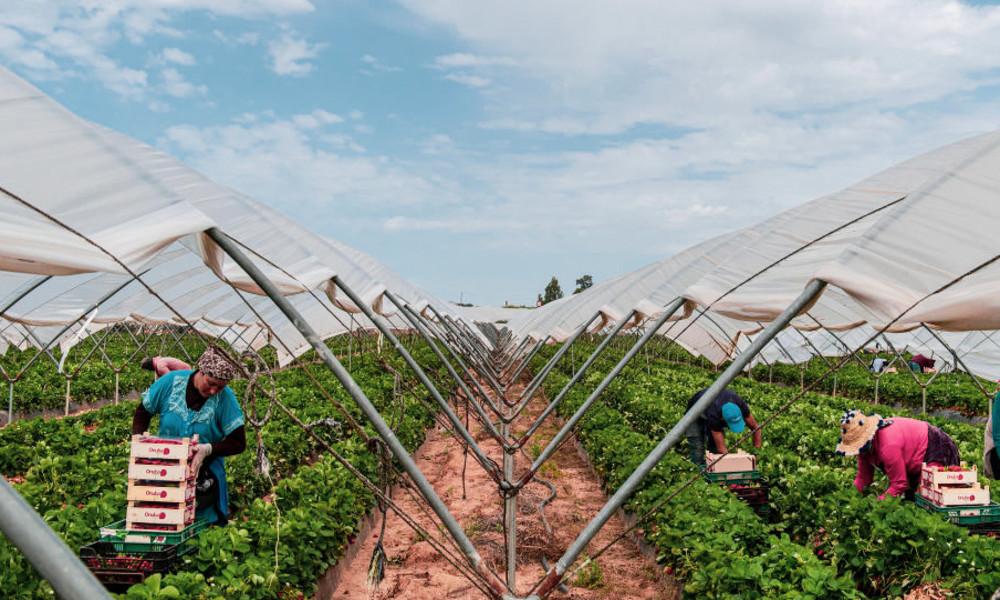 """""""Moderne Sklaverei"""" – Tausende marokkanische Saisonarbeiter in Spanien gefangen"""