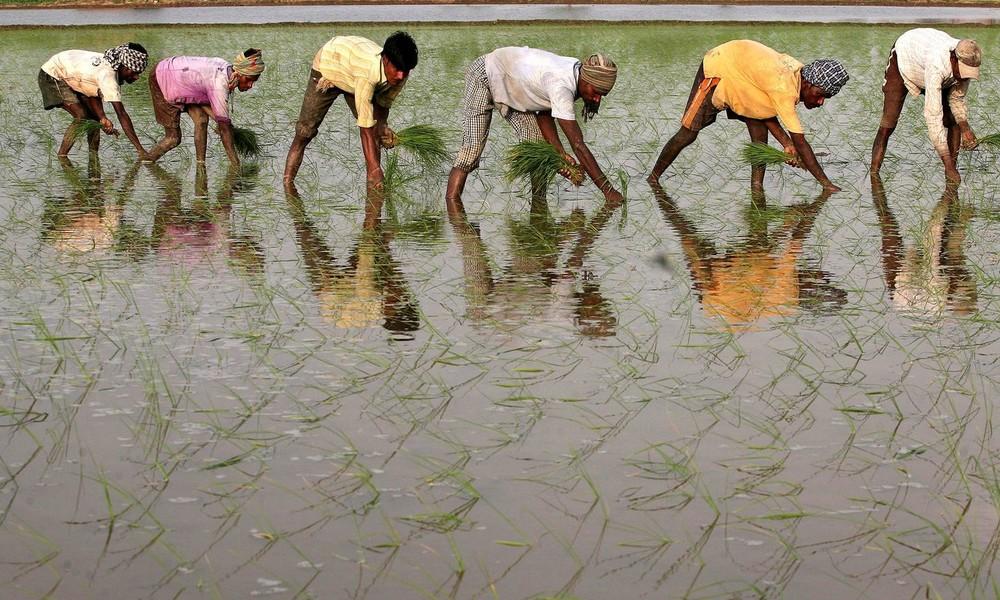 Finanzministerin: Landwirtschaft wird Indiens wirtschaftlichen Aufschwung nach Corona anführen