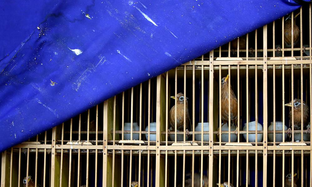 Wildtiermärkte und Massentierhaltung: Auch Vietnam trifft Gegenmaßnahmen