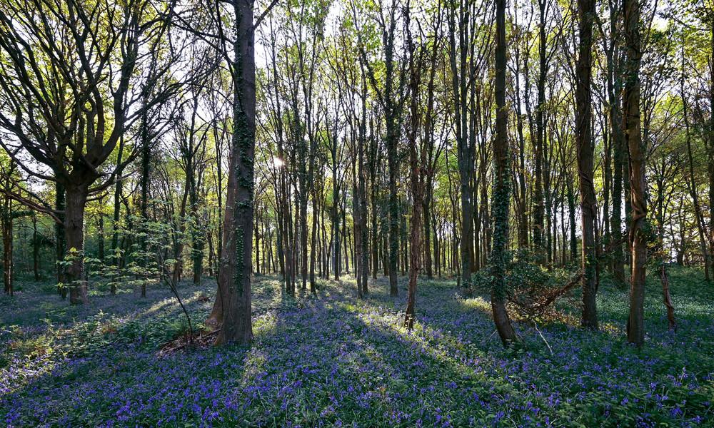 Jahrelang für tot gehalten: Mann aus Litauen versteckte sich im Wald in England