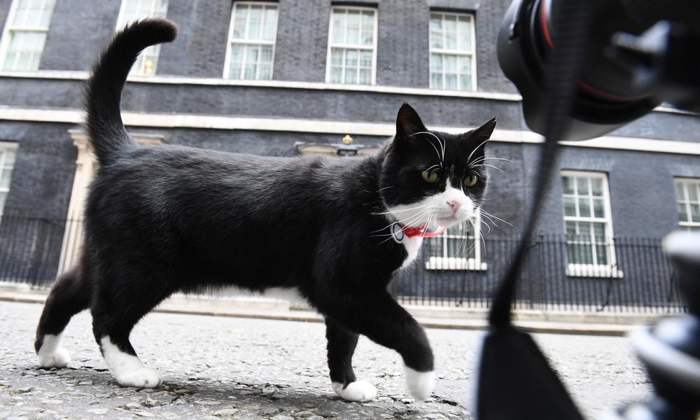 Kater des britischen Außenministeriums geht in Rente