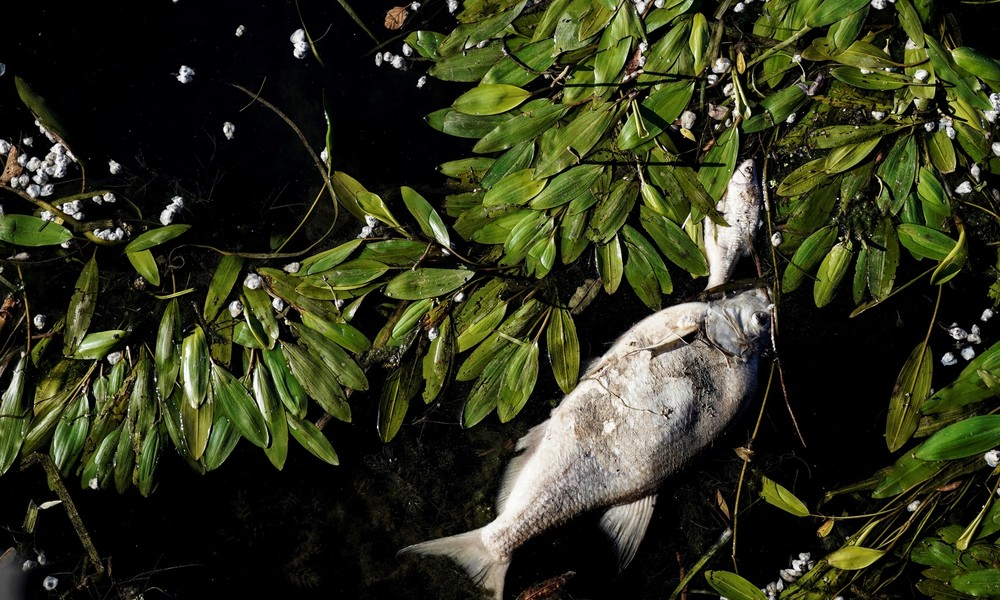 Nestlé-Fabrik für Kapselkaffee verursacht massives Fischsterben in Frankreich