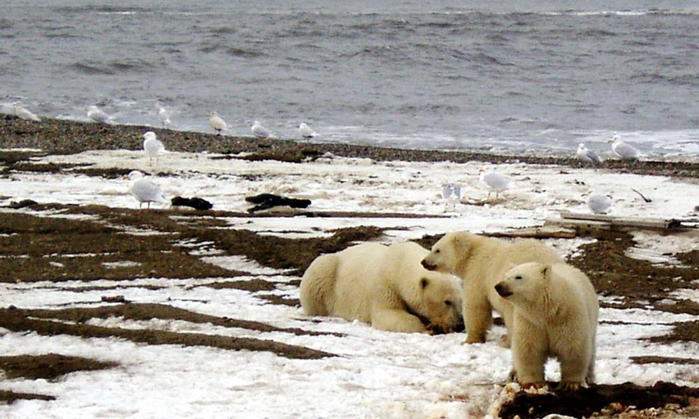 USA wollen Pläne zur Ölförderung in Alaskas Naturschutzgebiet schneller umsetzen