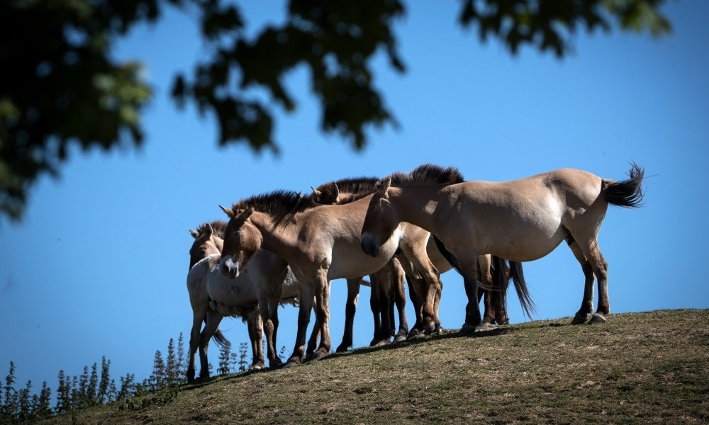 Mysteriöse Massaker an Pferden in Frankreich (Fotos)