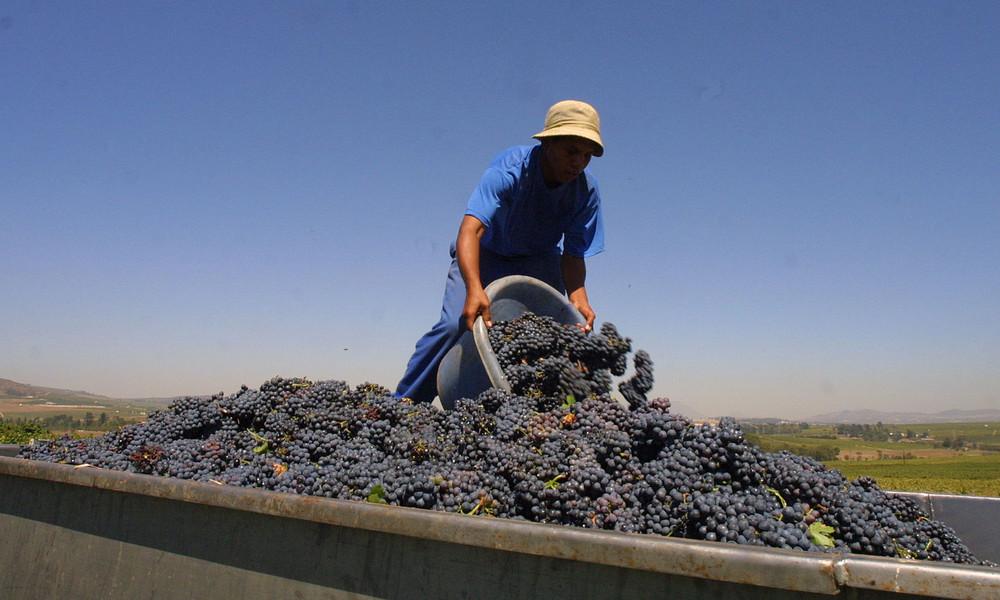 Wie deutsche Supermärkte Weinbauern in Südafrika ausbeuten