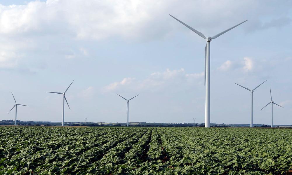 Windkraft und Artenschutz: Wie tödlich sind Windräder für Vögel und Fledermäuse?